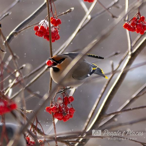 Feast for the Birds