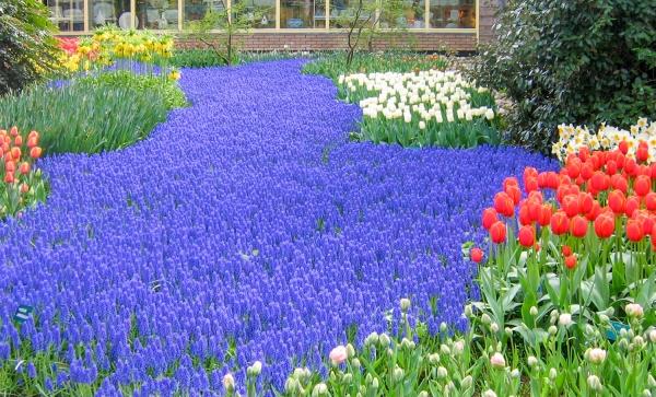 Lavender-Purple-Violet-Deep Blue