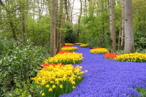 Lavender and Yellow Pathway